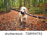 Muddy Dog In Autumn Nature....