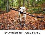 muddy dog in autumn nature.... | Shutterstock . vector #728954752