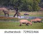Small photo of Nilgai antelopes (Boselaphus tragocamelus) in Keoladeo Ghana National Park, Bharatpur, India. Nilgai is the largest Asian antelope and is endemic to the Indian subcontinent.