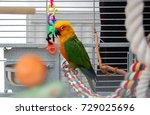 Colorful Parrot In Cage. A Pet...