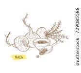 maca. tuber. powder. sketch.... | Shutterstock . vector #729085588