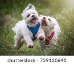 Stock photo happy dogs 729130645