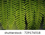 little green leaves with leaf...   Shutterstock . vector #729176518