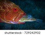 predator in action   big... | Shutterstock . vector #729242932