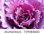 Background Violett Ornamental...