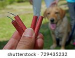 Help your dog overcome their...