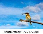 bee eater on blue sky... | Shutterstock . vector #729477808