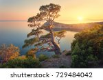 Beautiful tree on the mountain at sunset. Colorful landscape with old tree with green leaves, blue sea, rocks and yellow sunlight in dusk. Summer forest. Travel in Crimea. Nature background. Scenery - stock photo