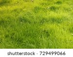 fresh green grass | Shutterstock . vector #729499066