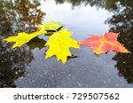 bright autumn leaves lie in...   Shutterstock . vector #729507562