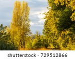 autumn landscape with yellow... | Shutterstock . vector #729512866