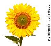 flower of sunflower isolated on ... | Shutterstock . vector #729535132