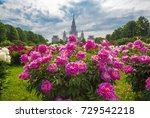 Wide Angle View Of Pink Peony...