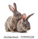 Stock photo two rabbits isolated on a white background 729592135