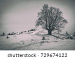 a lonely branchy tree on the... | Shutterstock . vector #729674122