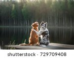 Stock photo two dogs outdoors friendship relationship together nova scotia duck tolling retriever and a 729709408