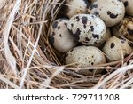 quail eggs in a nest and laid... | Shutterstock . vector #729711208