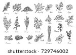 kitchen herbs and spices ... | Shutterstock .eps vector #729746002