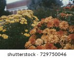 orange and yellow flowers in a... | Shutterstock . vector #729750046