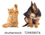 persian kitten attacking the... | Shutterstock . vector #729858076