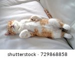 Stock photo a sweet and beautiful little red and white kitten cat lying on the back on a white carpet and 729868858