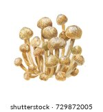 watercolor mushrooms  honey... | Shutterstock . vector #729872005