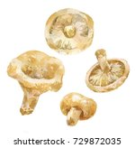 watercolor of milk mushroom ... | Shutterstock . vector #729872035