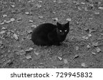 cat on the ground | Shutterstock . vector #729945832