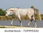 Small photo of Arabian thoroughbred stallion manufacturer Adamus