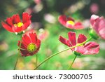 Bright flower photo with vignette, light and motion effects. - stock photo