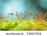 Bright green moss macro shot - stock photo
