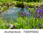 Small Natural Garden Pond With...