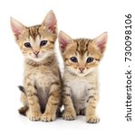 two small kittens isolated on... | Shutterstock . vector #730098106