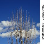 Small photo of Incipient tree buds in early spring against a partly cloudy mostly blue sky; Tonto Natural Bridge State Park in Arizona