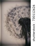 abstract nature   macro fluffy ... | Shutterstock . vector #730112626
