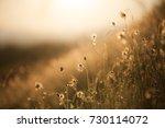 grass flower meadow close up | Shutterstock . vector #730114072