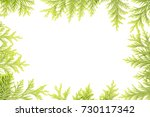 frame made of cypress branches... | Shutterstock . vector #730117342