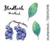 hand drawn painted set of... | Shutterstock . vector #730191448