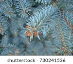 natural old christmas tree wood ... | Shutterstock . vector #730241536