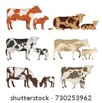 vector cow and calf collection... | Shutterstock .eps vector #730253962