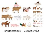 vector farm animals isolated on ... | Shutterstock .eps vector #730253965