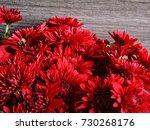 red chrysanthemums. macro.