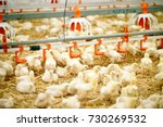 indoors chicken farm  chicken... | Shutterstock . vector #730269532