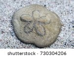 Sea Biscuit Shell On Sand Top...