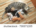 Stock photo little baby cute kitten breastfeed mom cat wood background 730371205