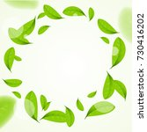 realistic green leaves circle... | Shutterstock .eps vector #730416202