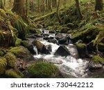 Goat Creek  Mt. Hood National...
