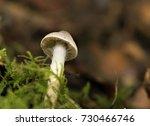 curtain mushroom | Shutterstock . vector #730466746