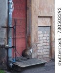 Small photo of Lonely feral homeless cat looking around and sitting on the old abandoned wood building threshold.