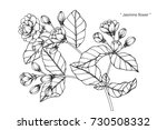 hand drawing and sketch jasmine ... | Shutterstock .eps vector #730508332